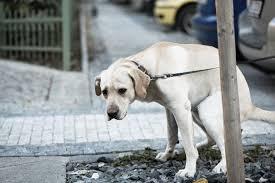 Madrid, se non raccogli la cacca del tuo cane pulisci tutta la strada. Giro di vite sugli indisciplinati