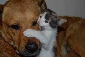 Cagnolona fiuta odor di micio e salva cinque gattini neonati