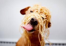 Il cibo italiano a quattro zampe conquista nuovi mercati. E alla Global Pet Expo in Florida è boom dei marchi made in Italy
