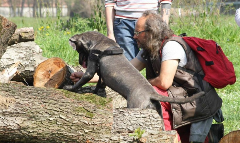 Un cane tutto da leggere: l'ABC con Vitalini