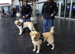 La lotta al terrorismo ha quattro zampe: raddoppiati i cani antiesplosivo