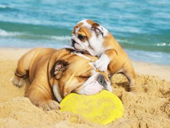 Venezia, a Lido arriva la spiaggia aperta ai cani