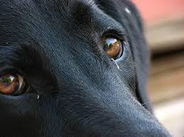 Sette cani in appartamento, allevamento abusivo scoperto dai carabinieri