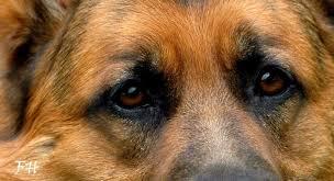 Cani condannati a morire di fame e sete nella casa venduta all'asta: liberati e in salvo per puro caso