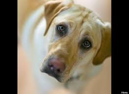 Occhi negli occhi, così il rapporto col cane passa per la chimica