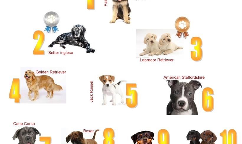 Cani di razza che passione: crescono anche in tempi di crisi le registrazioni Enci