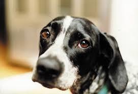 Lei si trasferisce e abbandona il cane solo in casa: salvato in extremis grazie a una segnalazione
