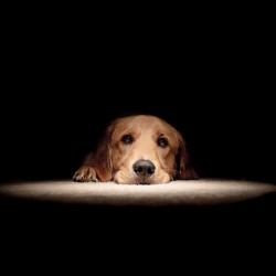 Litiga coi genitori, ammazza il cane a badilate
