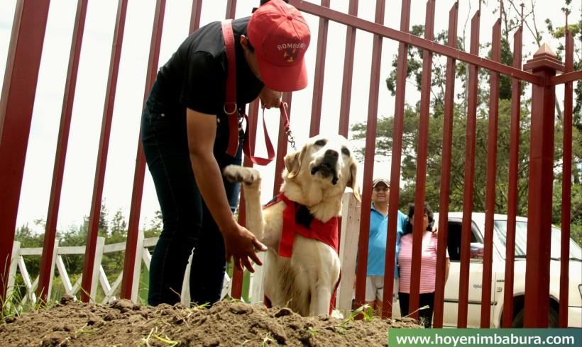 Ecuador, se ne va Dayko: il cane eroe del terremoto stroncato dalla fatica dopo aver salvato 7 persone
