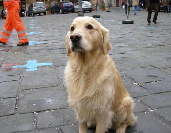 Pontremoli piange Dik, il cane soccorritore beniamino della città