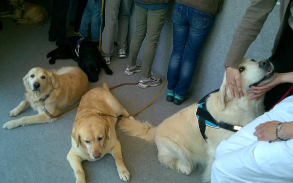 Pet therapy in rianimazione: a Firenze il primo progetto italiano