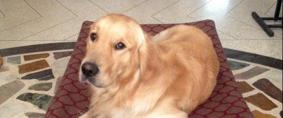 Marò, il cane di Girone bloccato alla frontiera: documentazione non in regola