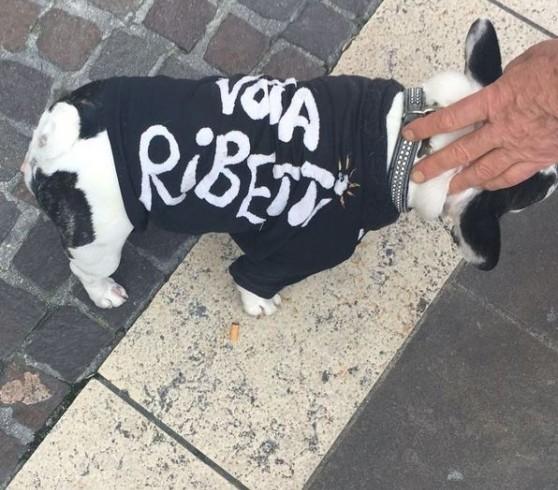 #elezioni2016 #city4dogs – A Pordenone la sfida si combatte anche a quattro zampe