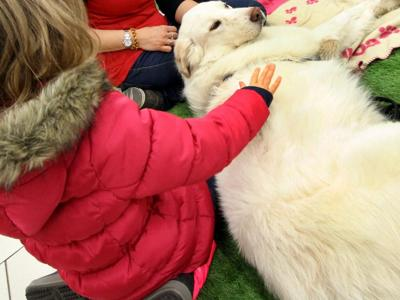 Quattro zampe in pediatria: Pisa apre alla pet-therapy tra i lettini