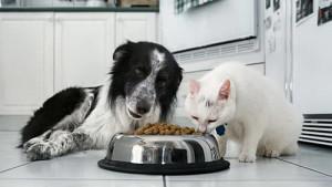 cane_gatto_cibo