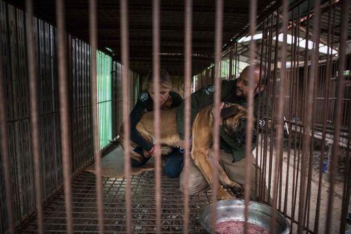 Corea del Sud, Hsi salva 200 cani allevati per essere mangiati