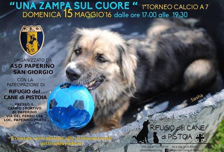 Torneo di calcio a sette per il rifugio del cane di Pistoia