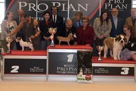 Il più bel cucciolo dell'anno è un chihuahua: per lui medaglia d'oro alla Pro Plan Puppy Cup 2016