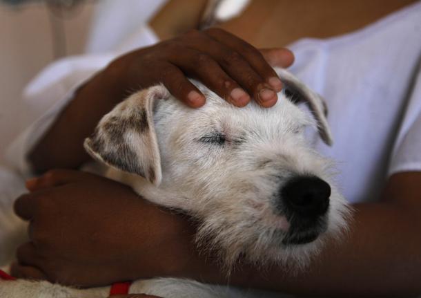 A Palermo cani nelle corsie dei bambini: al via progetto di pet therapy