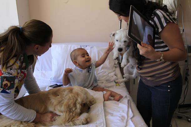 """Al Gaslini di Genova i cani fanno visita ai bambini. L'iniziativa si chiama come noi: """"Qua la Zampa"""""""