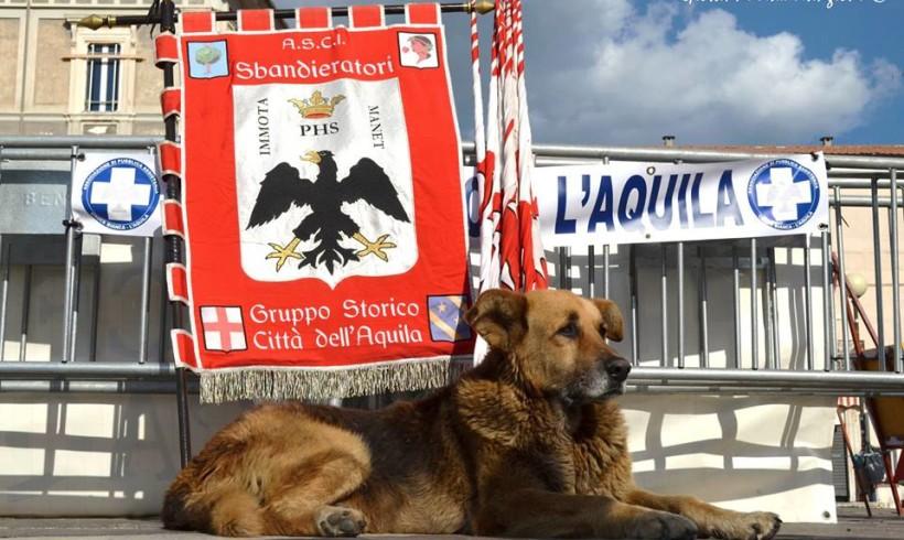 Si è spento Pluto, il cane simbolo del post terremoto a L'Aquila
