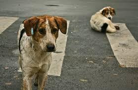 Sterilizzazioni o tassa comunale: LAV dice sì, ma senza esoneri per pastori e cacciatori