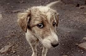 Cani abbandonati, cani randagi: ecco che fare se ne incontriamo uno