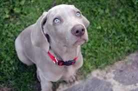 Elemosina col cane 2.0: ne ruba uno da un giardino per chiedere aiuti economici sui social
