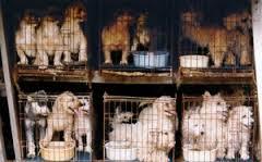 Traffico di cuccioli, LAV parte civile al processo di Lodi. In otto alla sbarra