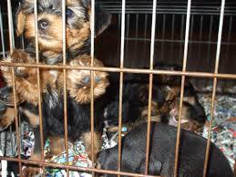 Misure urgenti per rafforzare il contrasto al traffico di cuccioli dall'Est: in parlamento arriva l'interrogazione