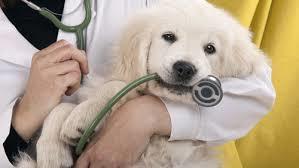 Farmaci cannabinoidi anche per cani, la nuova frontiera della veterinaria è un olio terapeutico