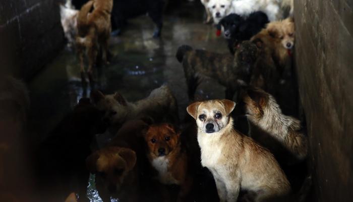 Stop al cane nel piatto, pet…izione internazionale contro il Festival di Yulin