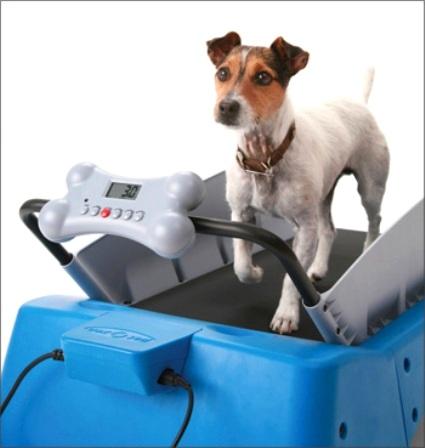 Piove? Si corre in casa: c'è il tapis roulant per cani modello Pronipoti. E hop hop hop…