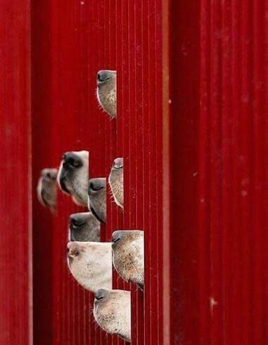 Cani in carcere, fioriscono – e portano frutto – i progetti di educazione cinofila dietro le sbarre