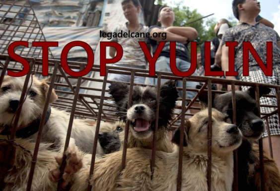 Stop Yulin, Lndc ci prova e scrive all'ambasciatore cinese