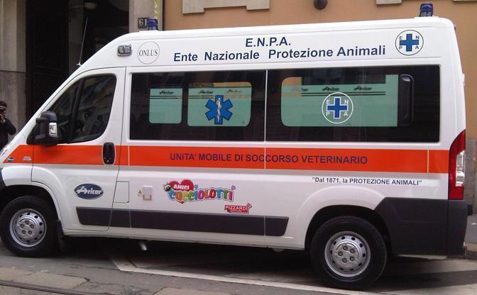 Al Cara di Mineo randagi da 4 a 80 in pochi anni: ora Enpa li sterilizza e vaccina tutti