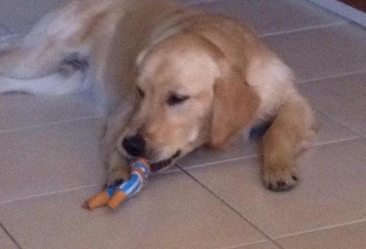 Famiglia Girone al completo: in Italia anche il cane Argo