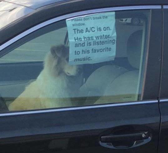 """Lascia il cane in auto e avvisa: """"Il condizionatore è acceso, ha acqua, ascolta la sua musica preferita"""""""