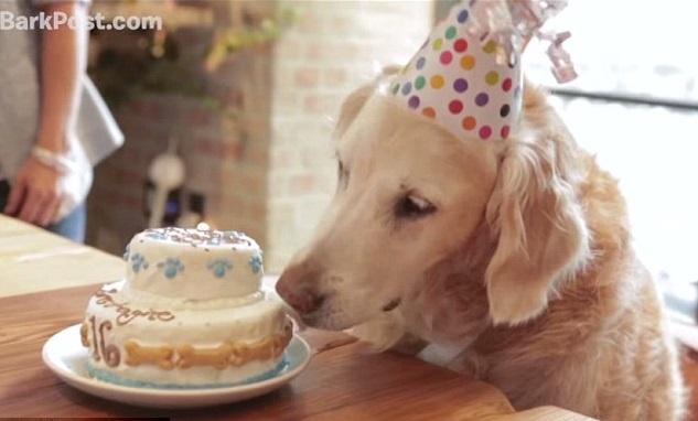 E' la Giornata internazionale del cane: auguri a tutti i 4 zampe