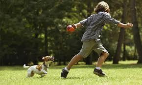 cane bambino corsa
