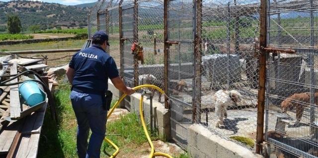 Canile lager a Siniscola, polizia e veterinari salvano 10 cani da caccia