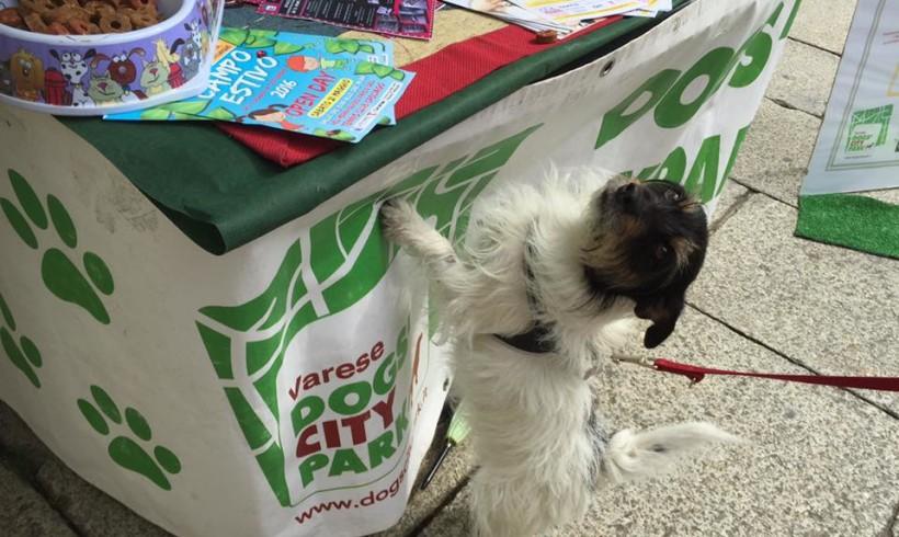 A Varese terza candelina per Dogs' City Park: dall'area cani, oggi un progetto multiforme per il benessere del cane sociale