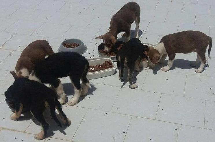 Cuccioli, adulti, anziani: a Agrigento è emergenza randagi. E U.N.A. chiede… una zampa