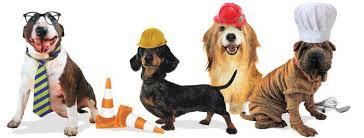 E' la Giornata Mondiale dei Cani in Ufficio: dal 1996 espansione tra alti e bassi