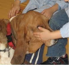 Bimbi e cani: settimane di giocosport nei centri cinofili Fisc – II parte