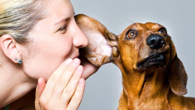 E' il migliore amico e anche il miglior confidente: parliamo più col cane che col partner. Lo afferma un'indagine inglese