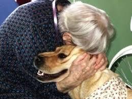 """""""Questa è una vecchia amicizia"""": comune di Padova e sindacati pensionati con Lav per la campagna adozioni di cani (e gatti) adulti"""