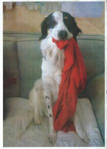 Snoopy era inseparabile dalla sua sciarpina rossa