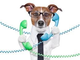 Torna la Giornata Mondiale dei Cani in Ufficio: dal 1996 espansione tra alti e bassi