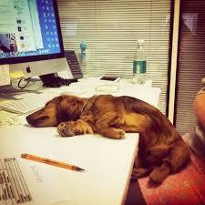 Giornata Mondiale dei Cani in Ufficio, Purina tenta di superarsi nel record